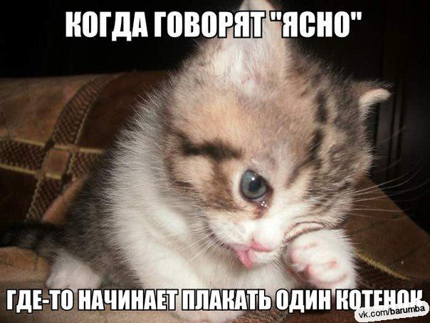 плачет котенок картинки