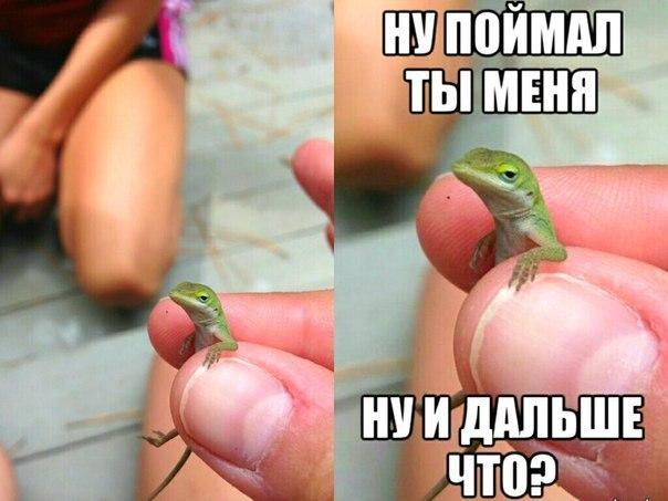 Анекдот про ящериц