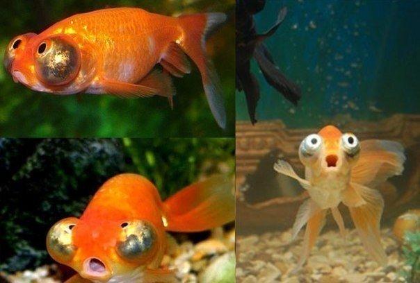 Скачать песню золотая рыбка волшебники двора