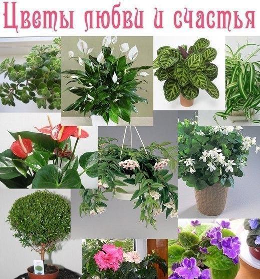 Приметы комнатных цветов