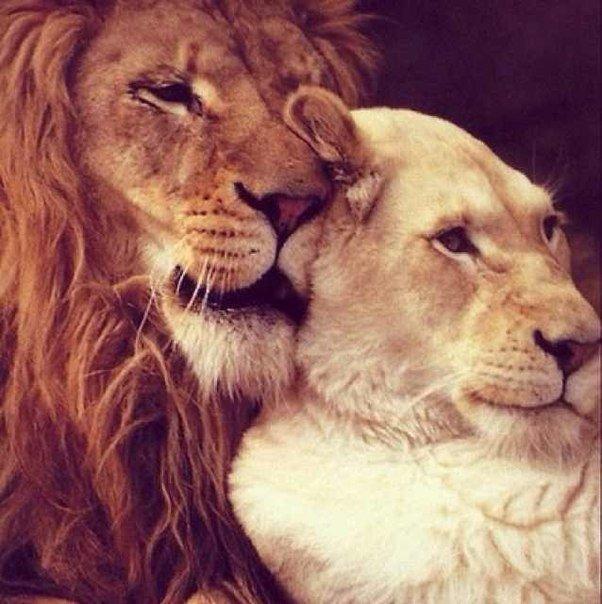 Влюбилась в мужчину льва что делать 97