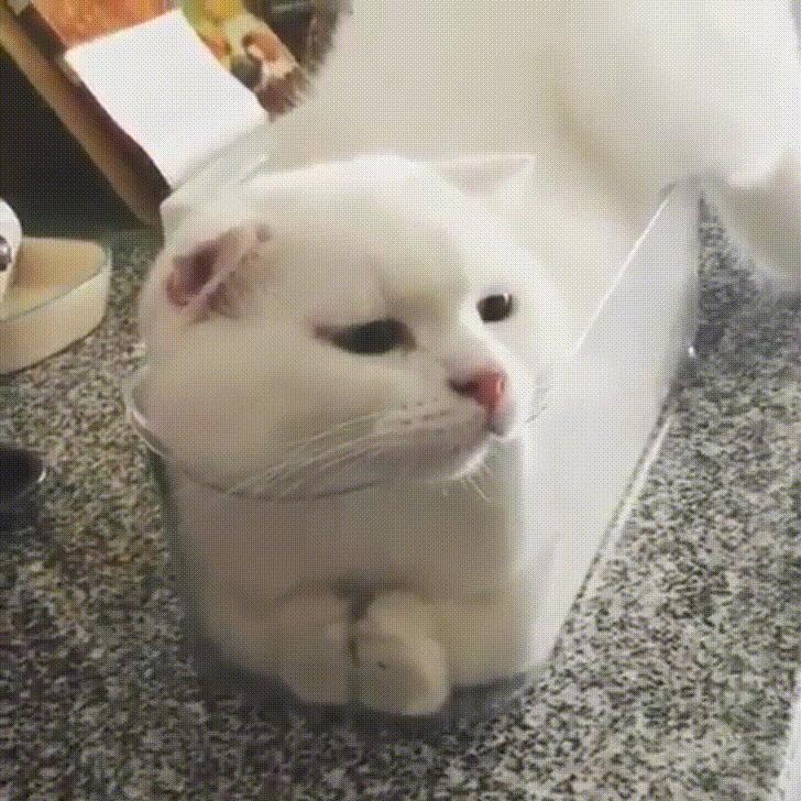 Самые прикольные гифки с котами