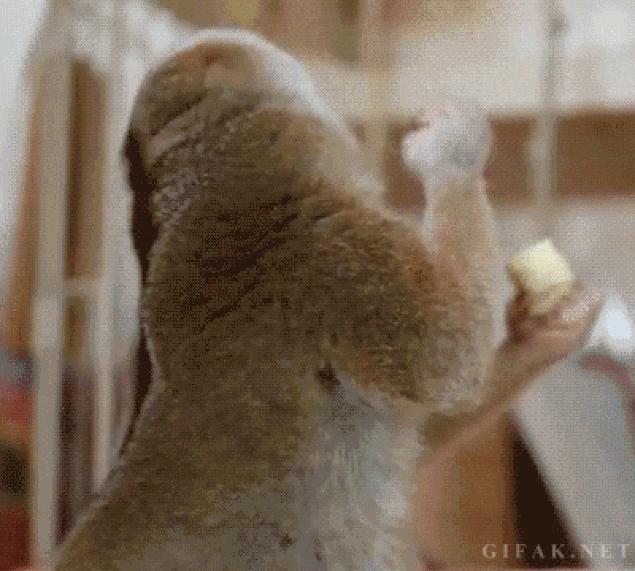Анимашки с животными прикольные, про животных смешно