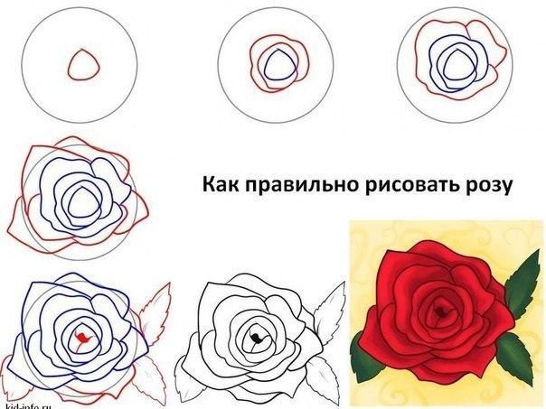 Как нарисовать розы пошаговое