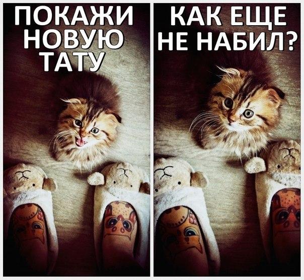 Смешные картинки про тату, флеш открытка новый