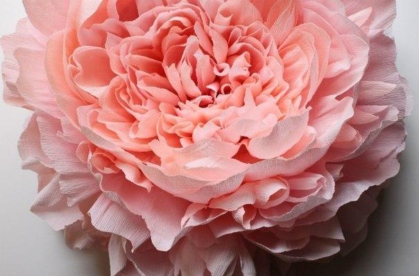 Большие цветы из бумаги своими руками пион