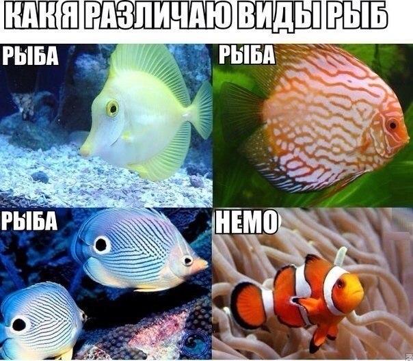 Смешные картинки с надписями про рыб, юбилеем